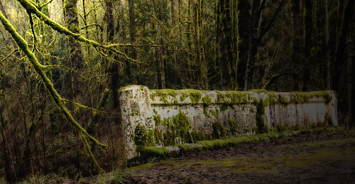trees abandoned forest moss branches bridges decaying