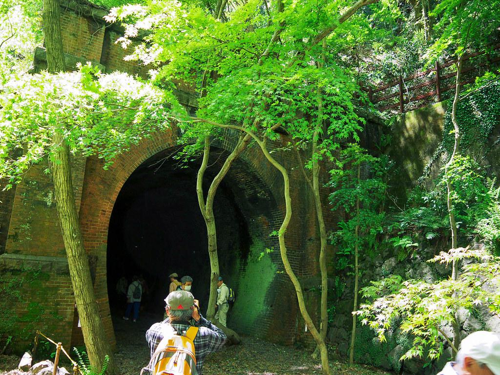 トンネルと森林のコラボレーション