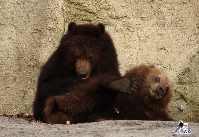 Tierpark Hagenbeck 110