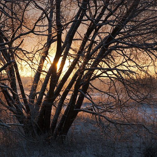 morning winter sunlight sunrise bush squareformat lithuania rytas lietuva rambynoregioninisparkas