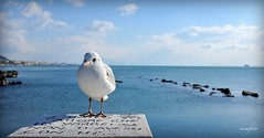 Happy 2015 !!! - Seagull - salerno