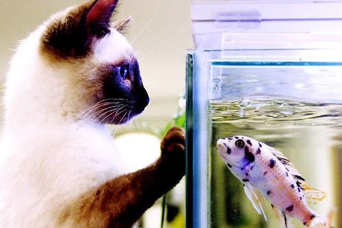 Carlotta et son ami le poisson