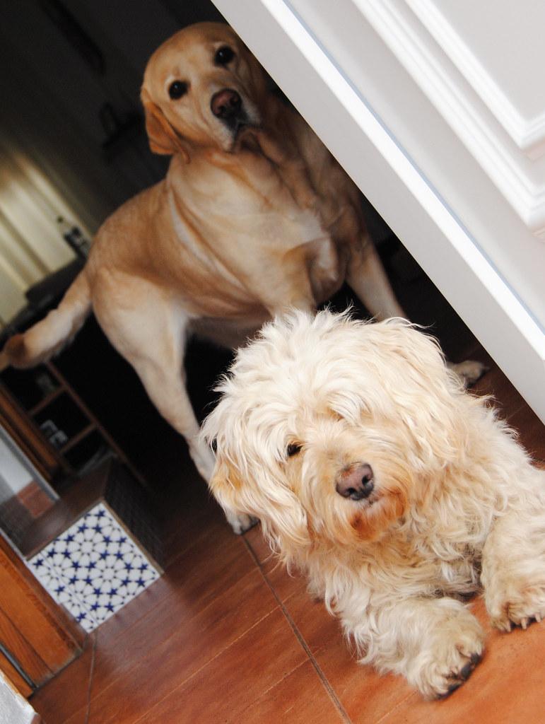 Curro and Lola