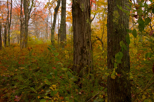 autumn nature leaves forest landscape coast colorful day maine foggy trails wells rainy shore preserve laudholm estuarine wellspreserveatlaudholm