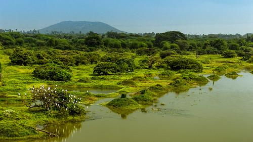 nature birdsanctuary vedanthangal chennaitourism
