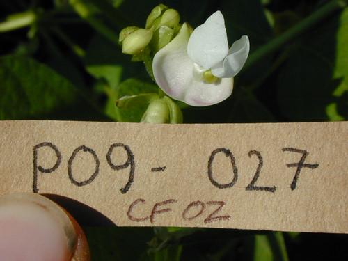P09-027 CF02 Fl