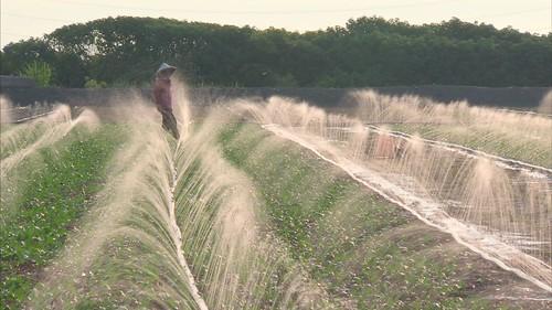 種稻有保價收購較不受行情影響