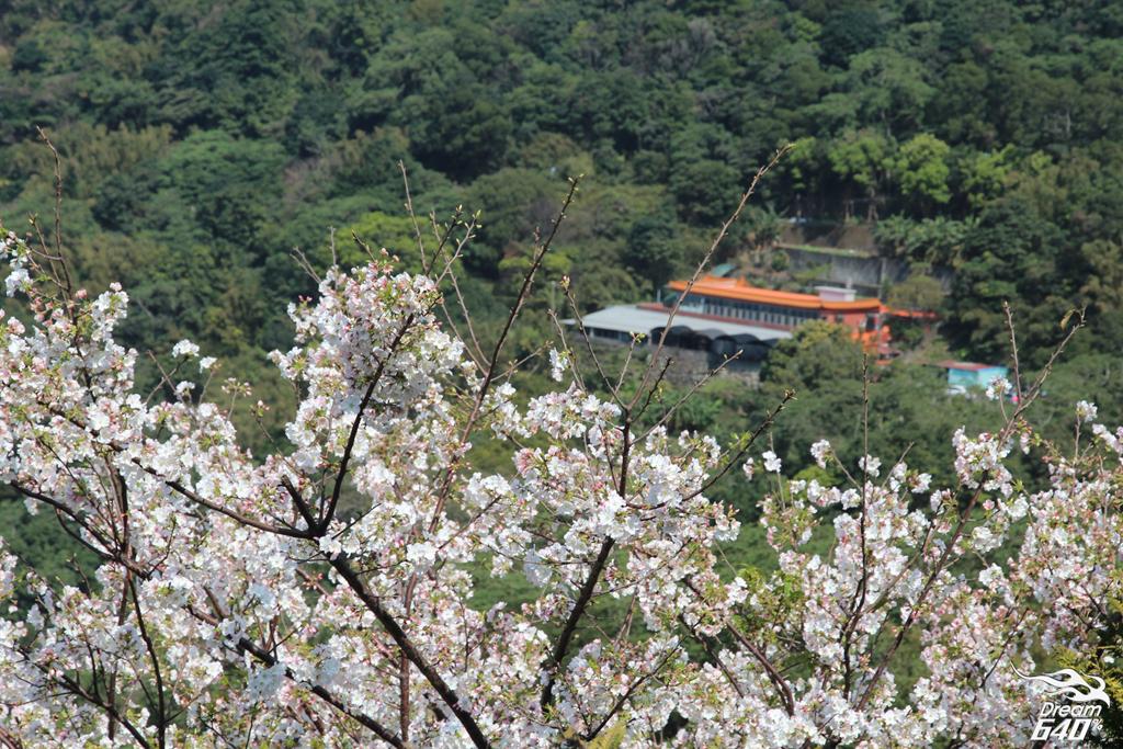 2015楓樹湖木蓮花23