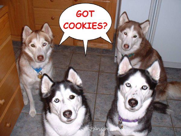 Ao4GotCookies