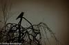 bird on a few sticks.jpg