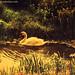 Swan at the Golden Lake