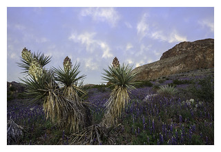 Spring in the Big Bend