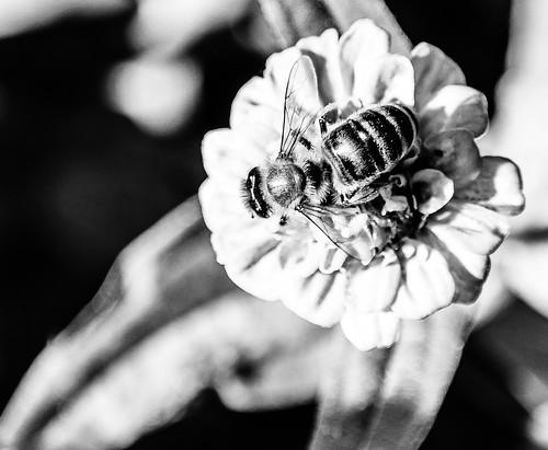 flowersinblackwhite nx2000 nx nxlens samsungsmart samsungcamera samsung 1855mm ois outdoor blackandwhite bw macro macromonday macromondays