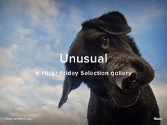 Flickr Friday Selection Gallery - Unusual
