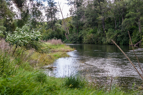 Barrington River at Relfs Road