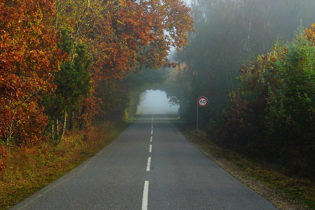 Fog in the morning, Nikon COOLPIX S6400