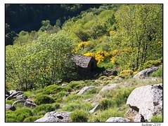 2014-06-01_Pont_de_Monvert-Florac-0003