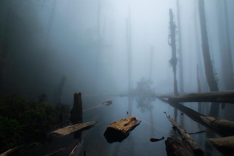 Raining Forest