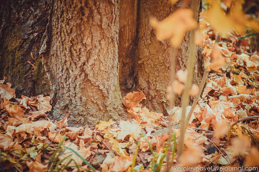 Autumn-296