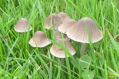 flower(0.0), pleurotus eryngii(0.0), agaric(0.0), oyster mushroom(0.0), agaricaceae(0.0), bolete(0.0), penny bun(0.0), champignon(0.0), grass(1.0), medicinal mushroom(1.0), agaricus(1.0), mushroom(1.0), flora(1.0), fungus(1.0),