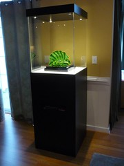 Contemporary-Display-Case-Black