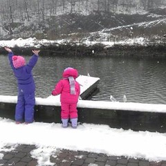 Feeding the #duck and #seagulls in the #snow. #latergram #stutookthis