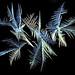 Ice Crystals, 25 November 2014 (3)