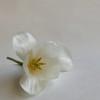 tulips-09_sm