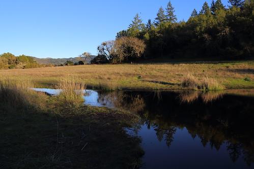 california canon pond sonomacounty springlakepark californianewt 5dmarkiii