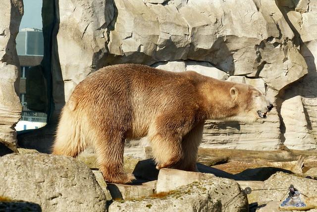 Zoo am Meer 08.03.2015  233