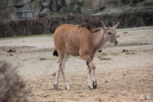 Sonntags Besuch im Zoo Berlin 25.01.2015 26