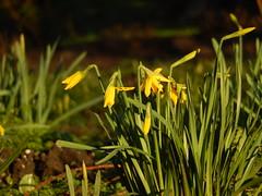 Spring arrives in Bute Park