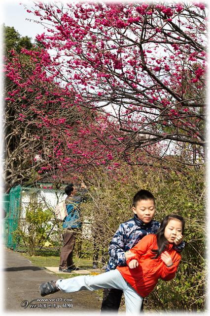 0202陽明山花卉007