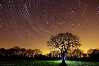 The Rebel Tree At night