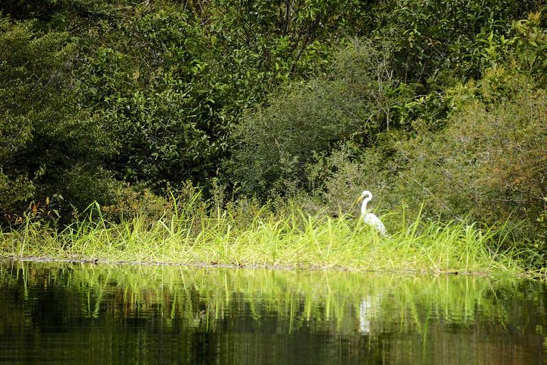 manaus-rio negro-amazon 86