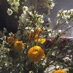 Just because.                                  #flowers #signsofspring #Ranunculus #Waxflower