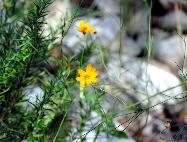 _DSC0013e ~ Wildflowers & Weeds