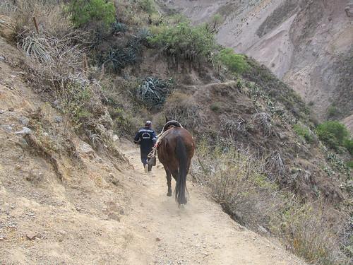 Trek du Cañon de Colca: un muletier