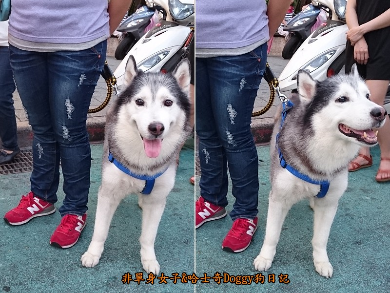 Doggy歡迎光臨06