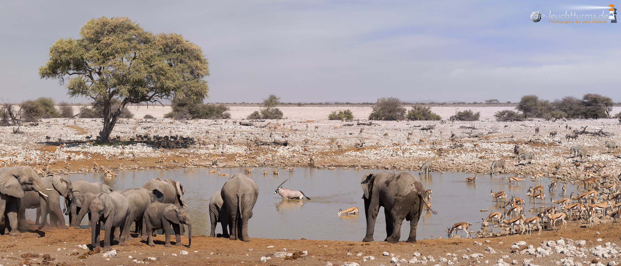 Late afternoon at the waterhole