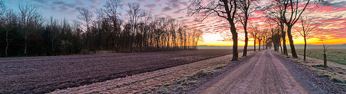 road trees sky sunrise germany landscape bavaria dawn maple vivid glowing dirtroad countryroad fluffyclouds