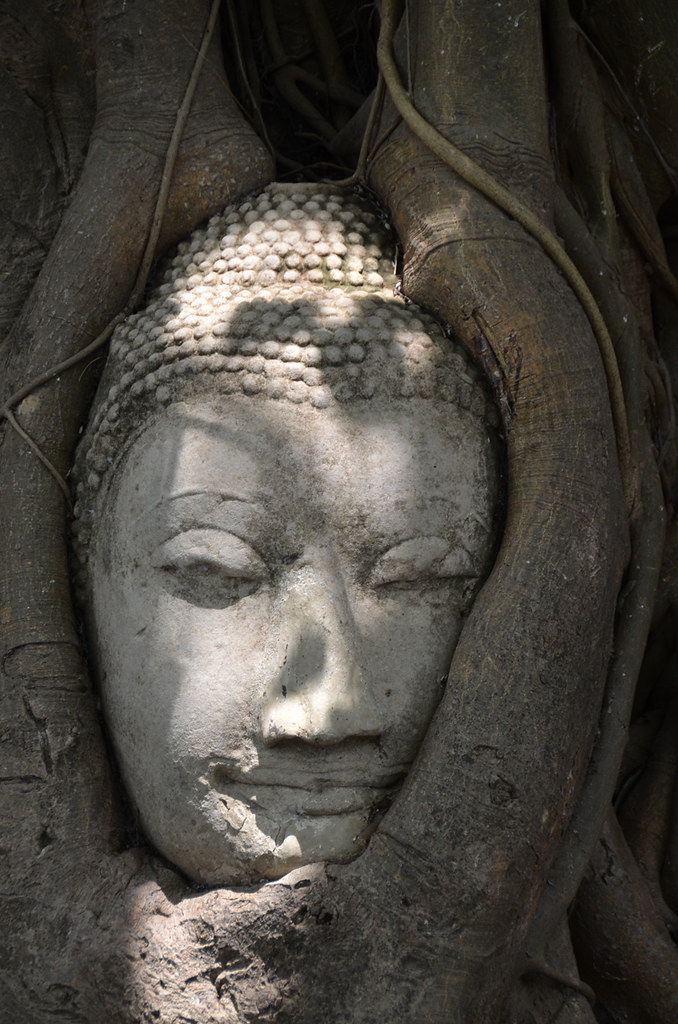 Cabeza del budda dentro del árbol en Ayutthaya