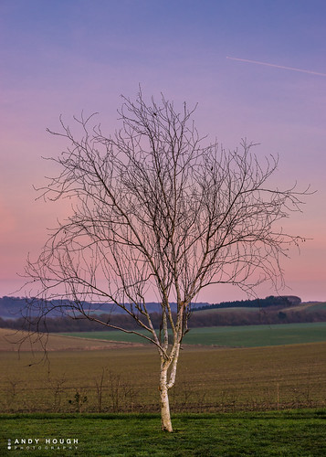 sunset portrait england sky color colour tree field unitedkingdom sony birch britwellsalome a99 sonyalpha andyhough slta99v andyhoughphotography