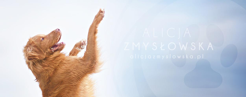 Alicja Zmysłowska - Fotografia Psów | Blog