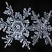 Snowflake-a-Day #25 by Don Komarechka