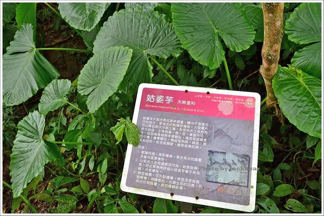 十分瀑布公園眼鏡洞瀑布005-DSC_0554