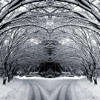 mirrored snow canopy