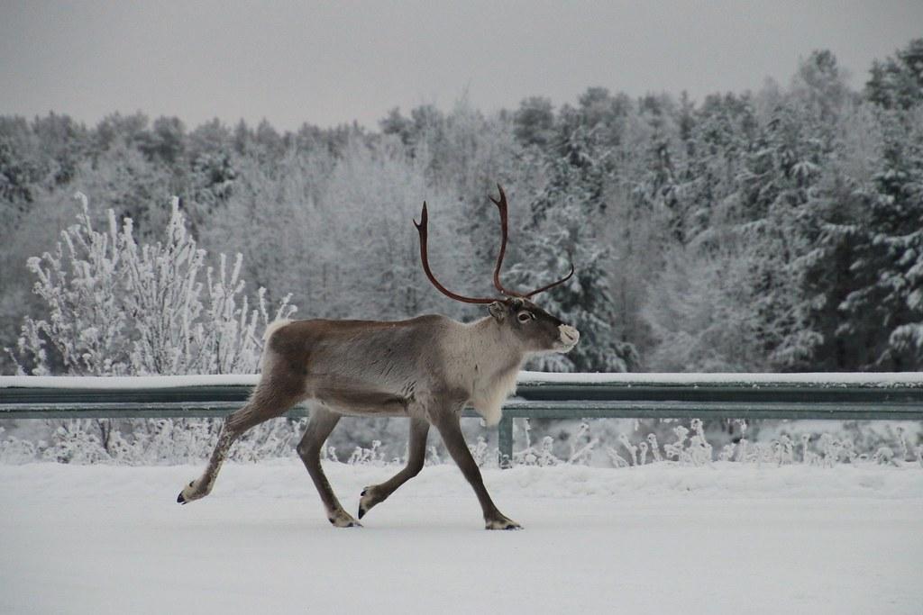 Finland120