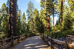 Kings Canyon & Sequoia - 104