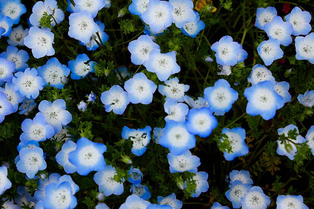 2014-05-04_00975_九州登山旅行.jpg